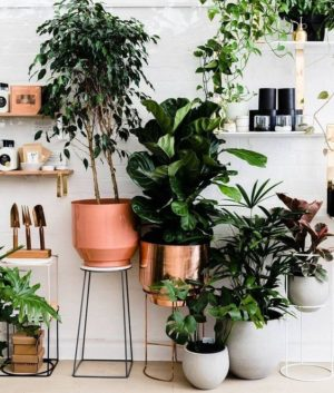 Plant Styling At Home