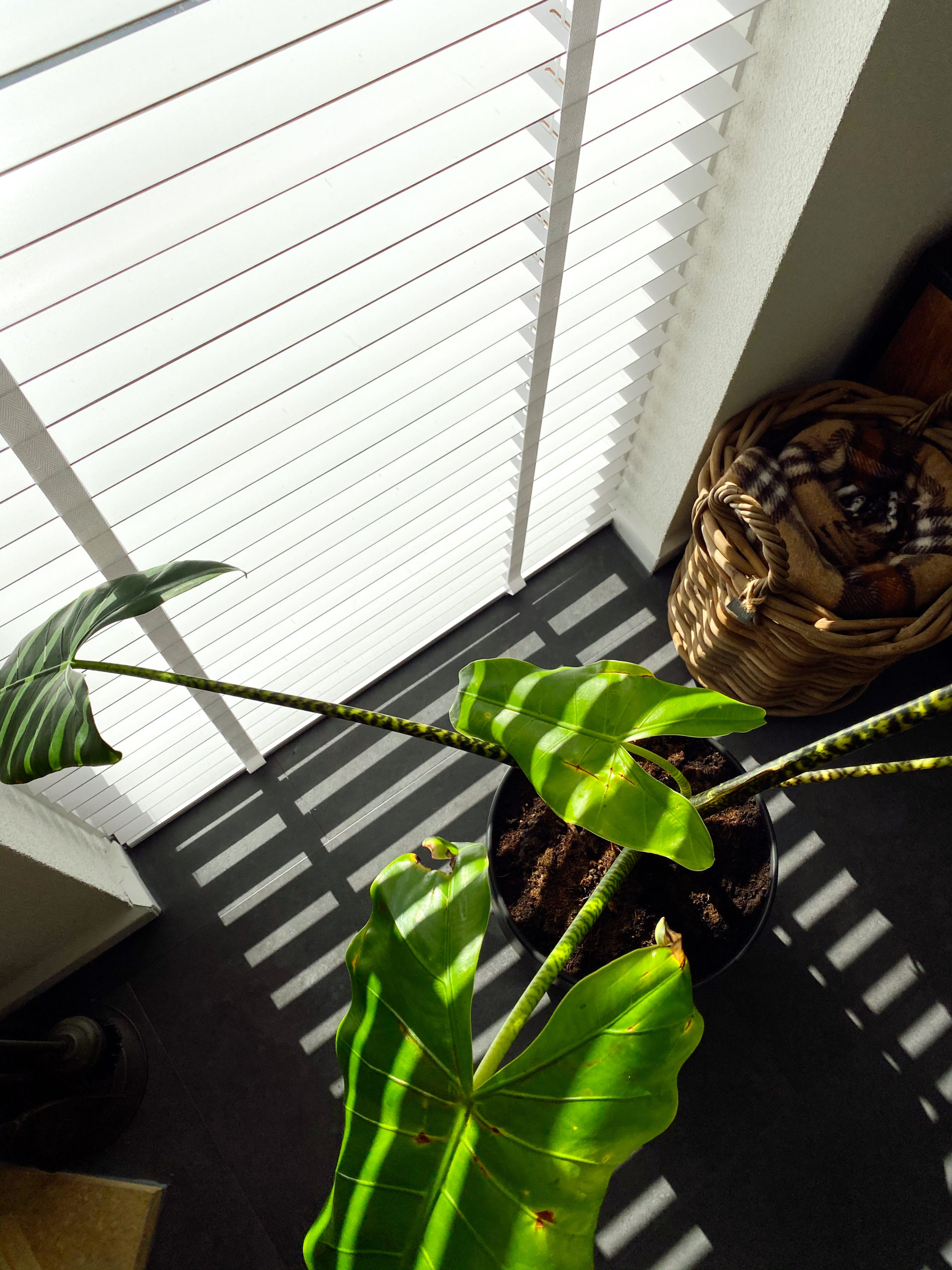 Raamdecoratie van Raamdecoratie.com